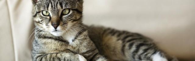 Wichtige Bgh Urteile Zur Tierhaltung In Der Mietwohnung