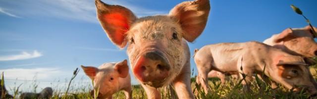 Grundsätzliches Tierverbot Im Mietvertrag Ist Nicht Zulässig