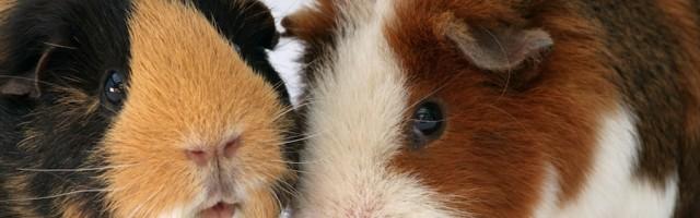 Kleintiere In Der Mietwohnung Hasen Hamster Und Ratten Willkommen