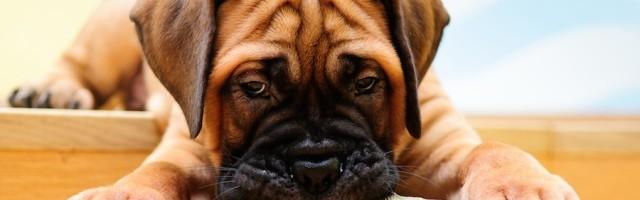 Hunde In Der Mietwohnung Was Ist Erlaubt Was Ist Verboten