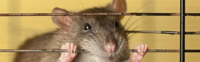 Abmahnung Wegen Tierhaltung Vorlage Tipps Für Vermieter
