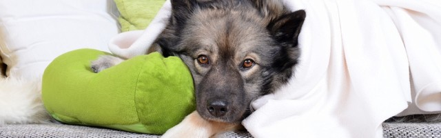 Tierhaltung In Wohnung Trotz Verbot Im Mietvertrag Mietrecht Org