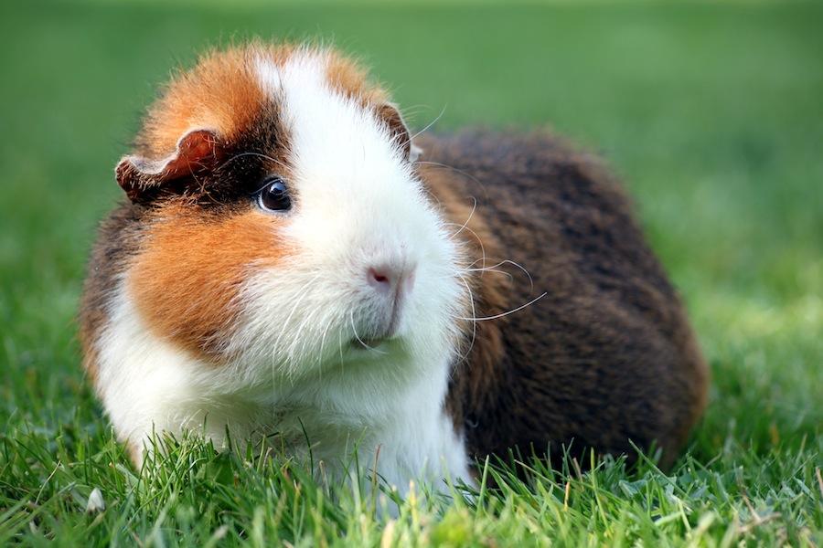 Formulierung Für Tierhaltung Im Mietvertrag Muster Für Vermieter