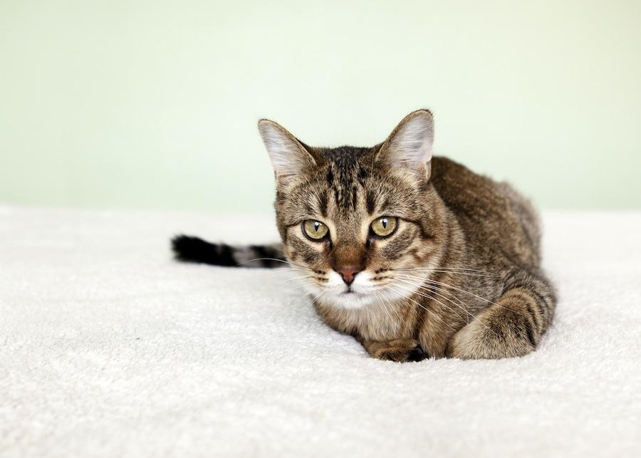 Katze In Der Mietwohnung Was Ist Erlaubt Und Was Nicht