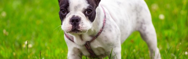 Mietwohnung Hundehaltung Nach Grossen Bzw Schulterhohe