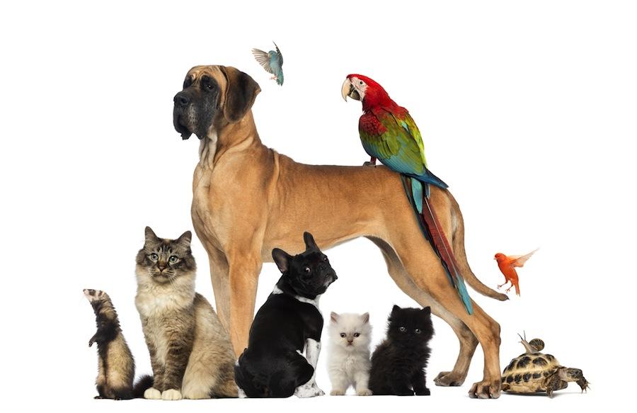 Frettchen Als Haustier In Mietwohnung Erlaubt Oder Verboten