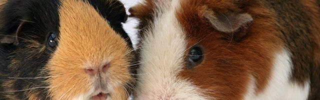 Tierhaltung In Mietwohnung Verbieten Möglichkeiten Der Vermieter