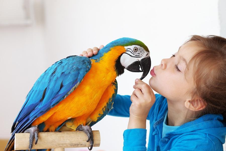 Widerruf Der Tierhaltung In Mietwohnung Vorlage Für Vermieter