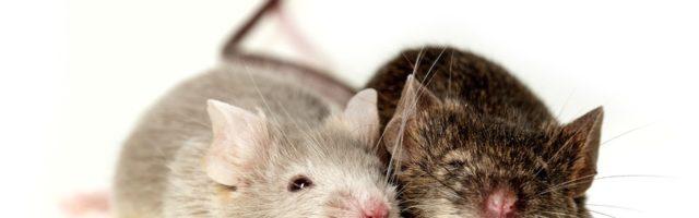 Kündigung Wegen Unerlaubter Tierhaltung In Mietwohnung Möglich