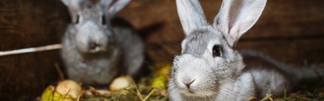 Kaninchen Und Hasen Als Haustiere In Mietwohnung Erlaubt
