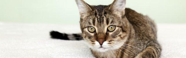So Urteilen Gerichte Katze Als Haustier In Mietwohnung Mietrechtorg